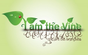 I-am-the-Vine-900x562