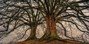 tree, nature, wood-3097419.jpg